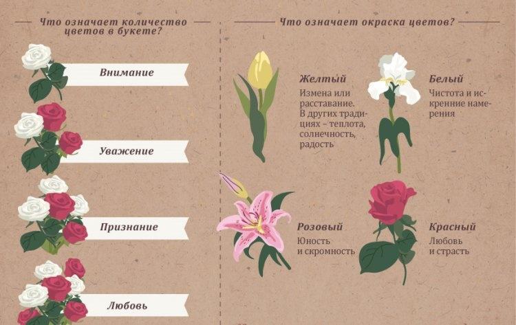 цветы говорят о многом