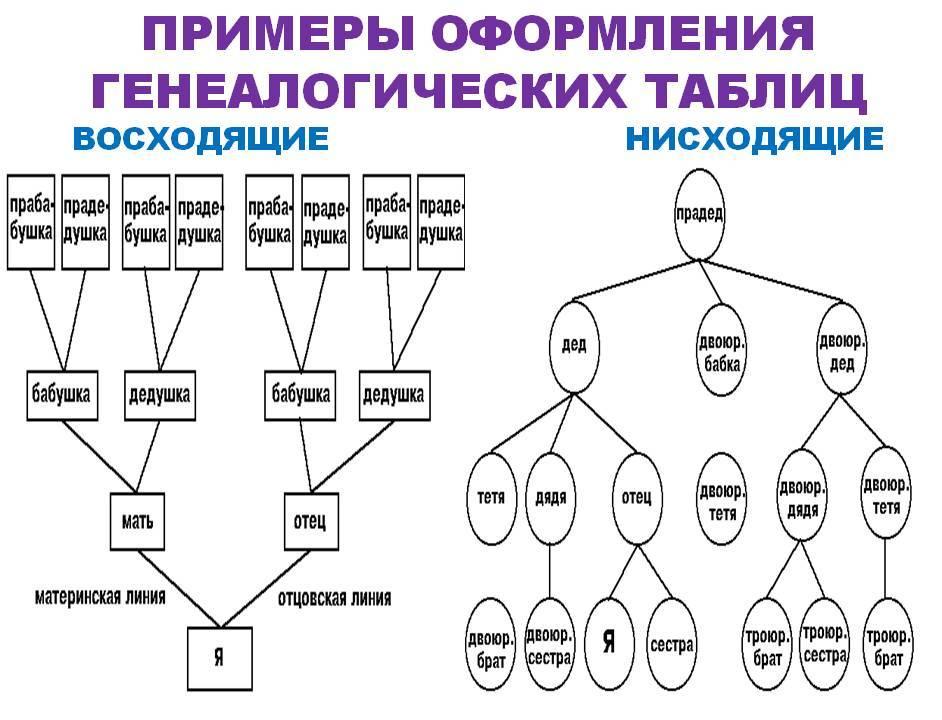 родословная семьи -генеалогическое древо